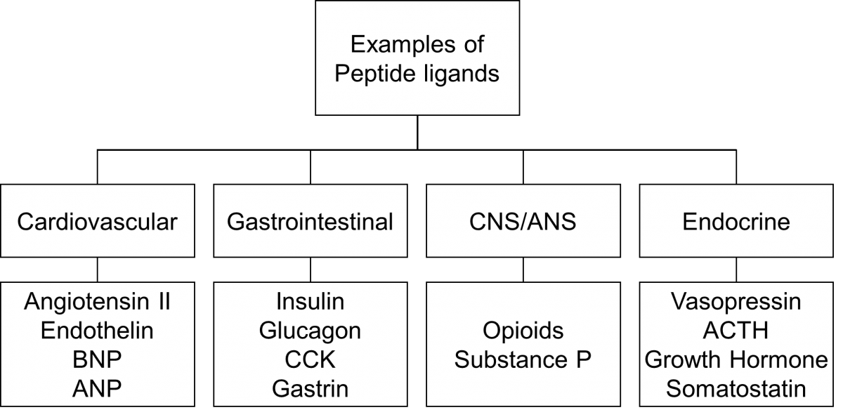 Peptides Pharmacology Education Project